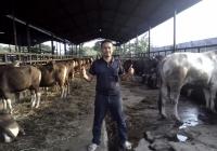 Jual sapi qurban murah bekasi