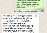 Jual Sapi Qurban 2017 (11)