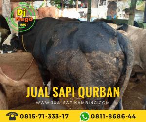 Daftar Harga Sapi Qurban Murah Terbaru 2018 area Jabodetabek