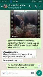 Jual-Sapi-Qurban-2017-7