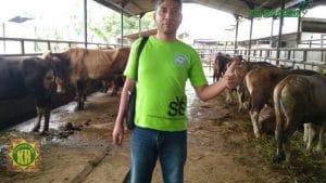 harga sapi jakarta