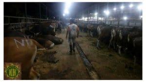 harga hewan kurban